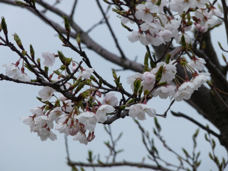 20120414_kanazawa_18asr403