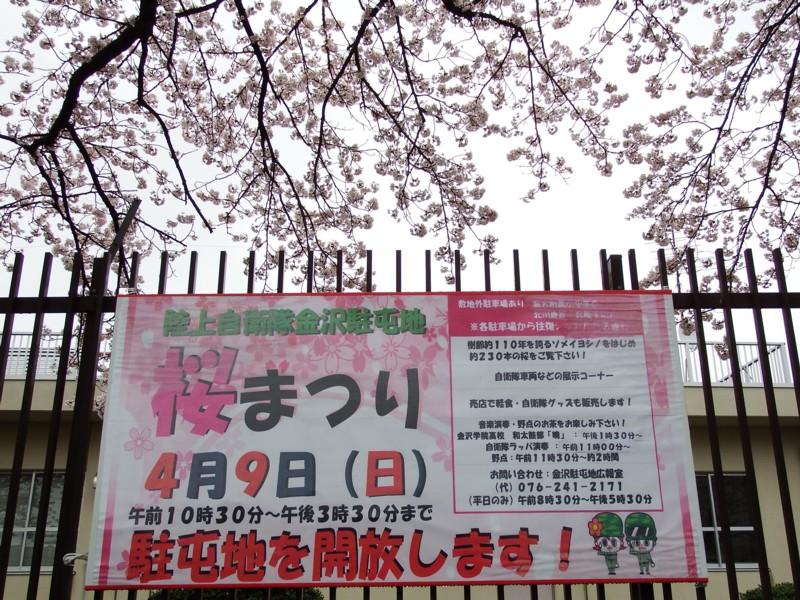 20170409_kanazawa_02sakura