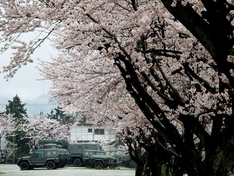 20170409_kanazawa_13sakura