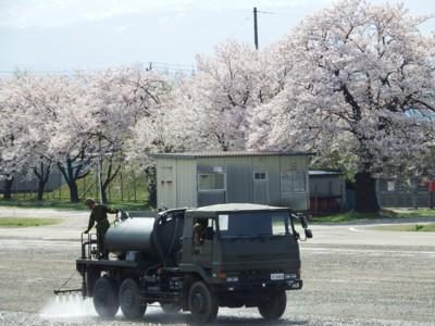20170416_takada_07sakura