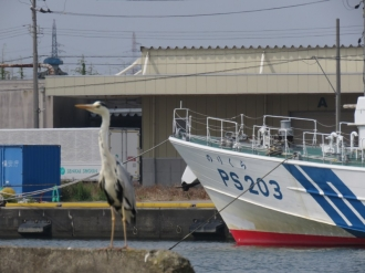 20200526_fushiki_03ps203